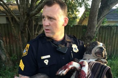 Florida dog survives three gunshots
