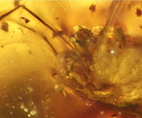 World's first amber-preserved arachnid penis