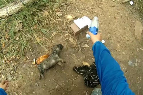 Fisherman uses CPR to rescue drowning puppy