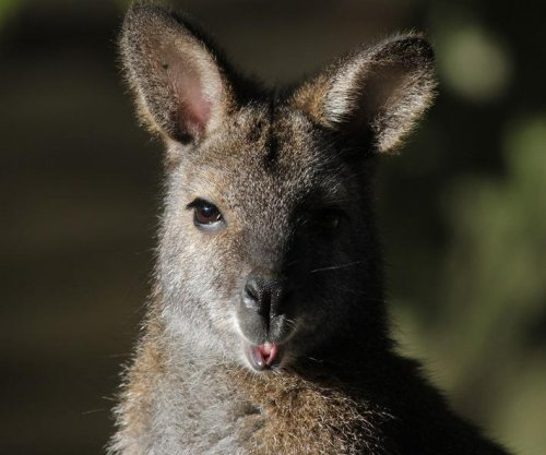 German police hunt escaped wallabies near petting zoo