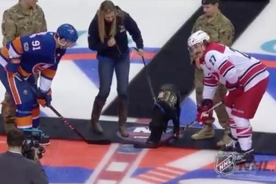 Charlie the service dog drops puck at New York Islanders, Carolina Hurricanes game