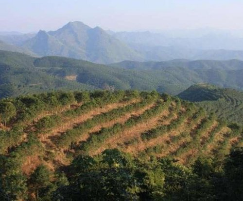 Rubber expansion comes with economic and environmental risks