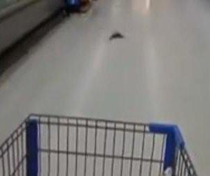 Swooping bats surprise shoppers at Texas Walmart