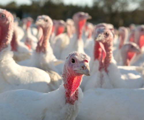 Officials: 'Highly pathogenic' bird flu killed 15,000 Minnesota turkeys