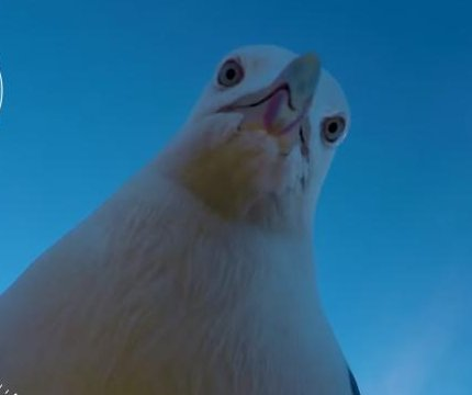 Norwegian man finds camera five months after seagull theft