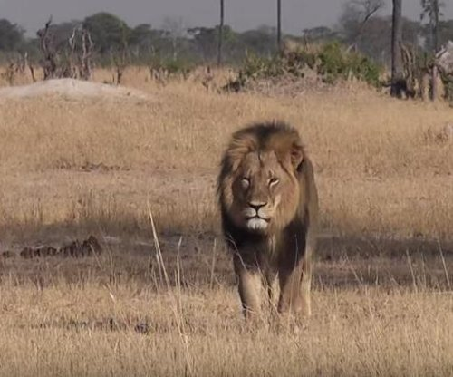 Major airlines ban big-game trophy transport after Cecil the lion killing