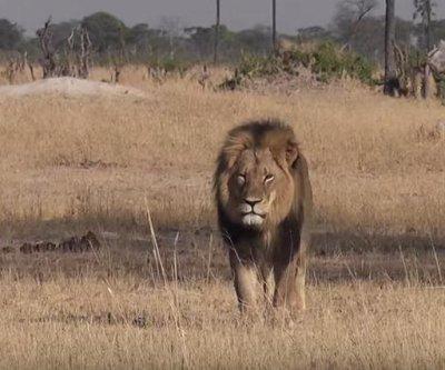 Major airlines ban big-game trophy transport after Cecil the lion killing