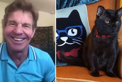 Dennis Quaid adopts shelter cat named Dennis Quaid