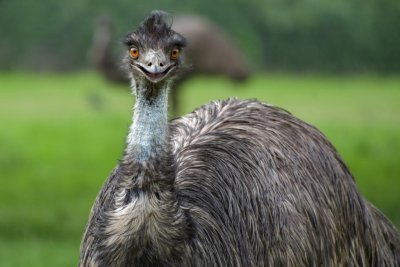Emu captured in New York state spends night in family's basement
