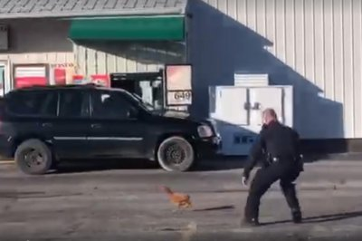 Police chase elusive chickens through West Virginia parking lot