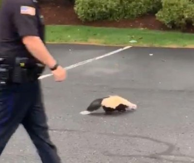 Police officer rescues skunk with cup stuck over its head