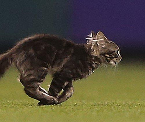 Thousands hope to adopt St. Louis Cardinals 'Rally Cat'