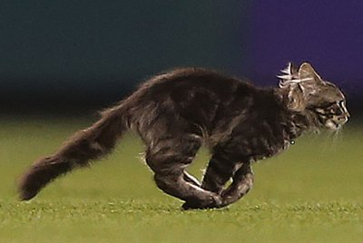 Thousands hope to adopt St. Louis Cardinals 'Rally Cat'