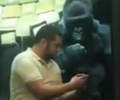Kentucky zoo gorilla browses photos on visitor's cellphone