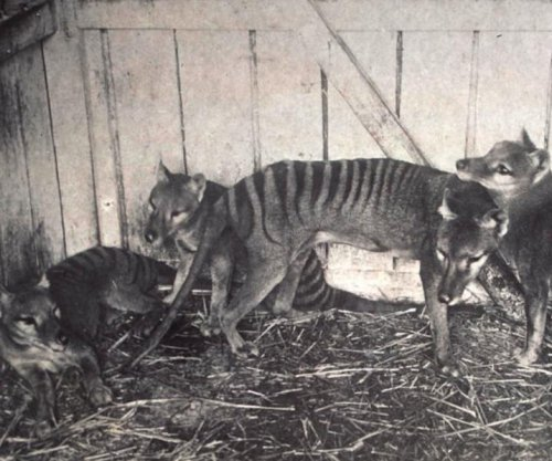 Genome reveals secrets of Tasmanian tiger's extinction