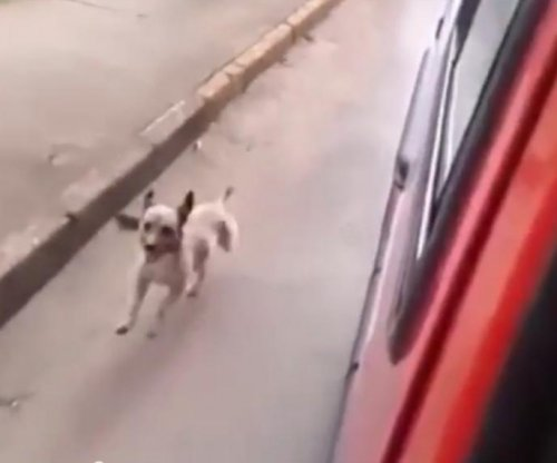 Dog chases ambulance carrying owner in Brazil