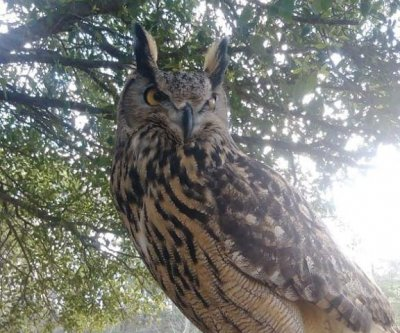 Exotic owl escapes wildlife sanctuary in North Carolina