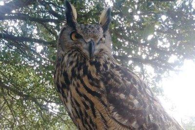 Exotic owl escapes wildlife sanctuary in North Carolina