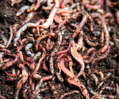 Invasive earthworms are changing forest ecosystems