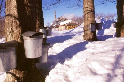 Vermont burglar destroyed 300 gallons of maple syrup with ax