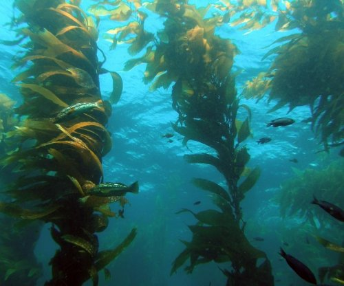 Kelp forests are vital to marine biodiversity, just as Darwin predicted