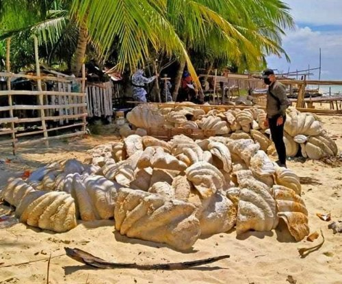 Philippine Coast Guard seizes 200 tons of giant fossilized clam shells