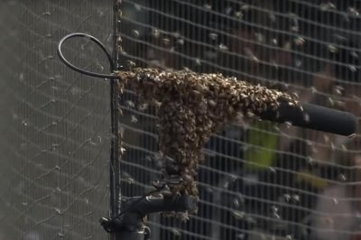 Swarms of bees invade Petco Park, delay Marlins and Padres game