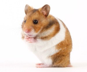 Police: Hamster killed in retaliation