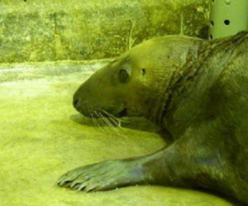 Dumbledore the field seal treated for pneumonia