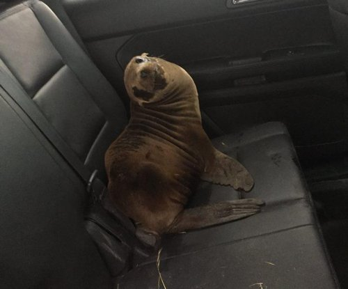 California police rescue seal found on highway