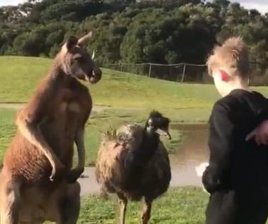 Kangaroo punches young boy in the face at wildlife park