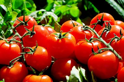 Florida's tomato industry could be 'wiped out' under new trade deal