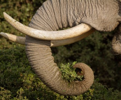 Police: 'Queen of Ivory' smuggled 706 elephant tusks