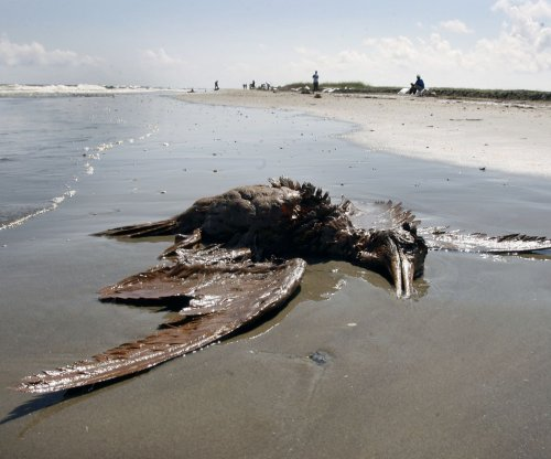 Oil spills disrupt entire food webs, new study shows