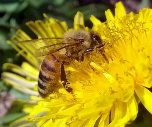 Pesticides, poor nutrition deadly one-two combo for honey bees