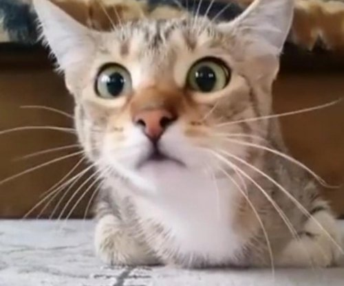 Cat becomes terrified while watching scary movie