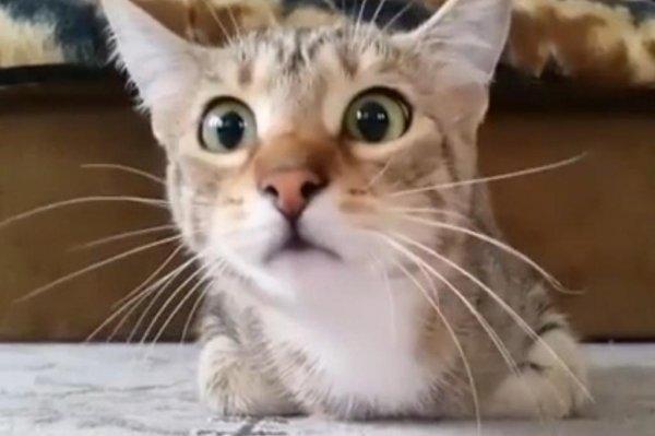 Cat Energy Gif