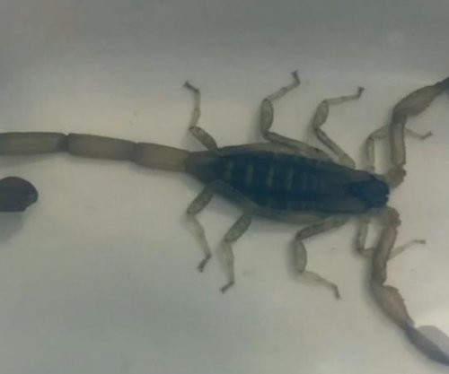 Pennsylvania man stung by scorpion that hitched a ride from the Virgin Islands