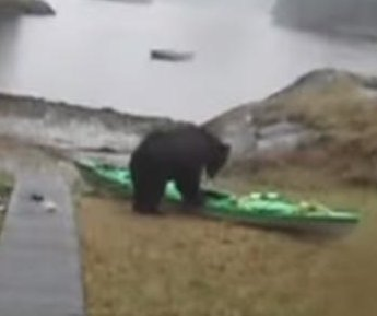 Woman begs black bear to stop kayak attack in viral video