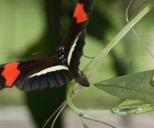 Butterflies tell plants apart by leaf shape