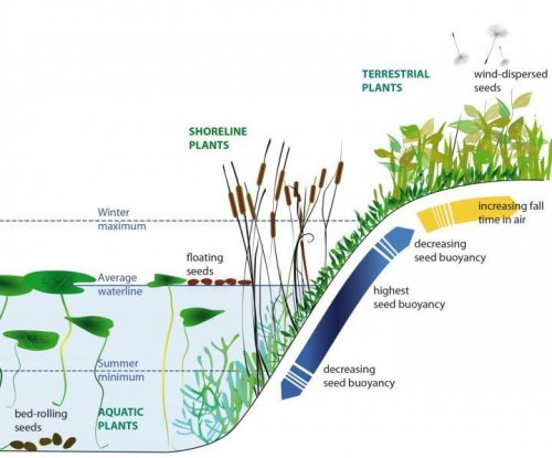 Plant purposely sink, float and fly seeds to find new territory