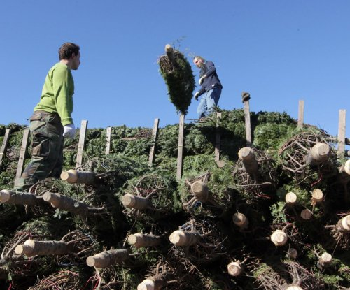 U.S. Christmas tree shortage may drive up prices
