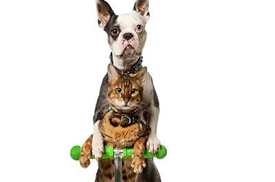 Scooter-riding dog and cat duo earn Guinness World Record