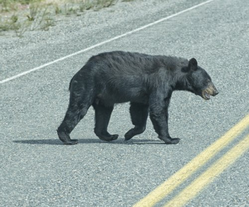 Massachusetts police: Don't chase bears with hatchet while drunk