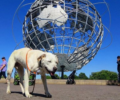 New Jersey man taking terminal dog on 'bucket list adventure'