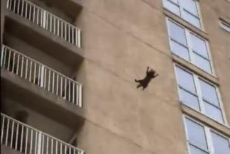 Reckless raccoon jumps from ninth story of building