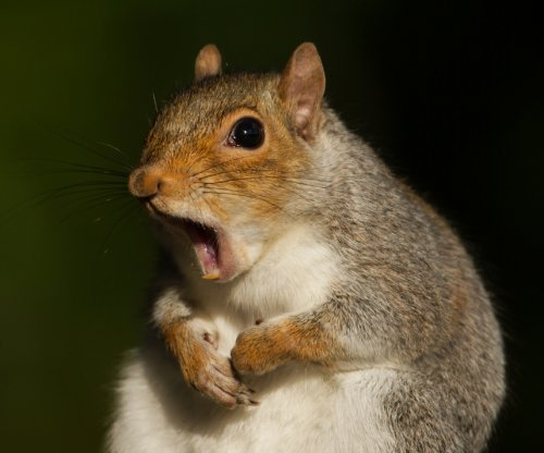 Squirrel trips breaker, leaves thousands without power in New Hampshire