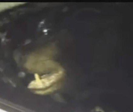 Bear breaks into Connecticut car, fails to eat banana