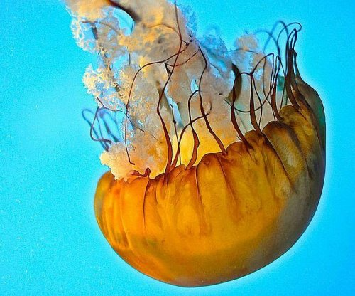 Heat beats cold for treating jellyfish stings