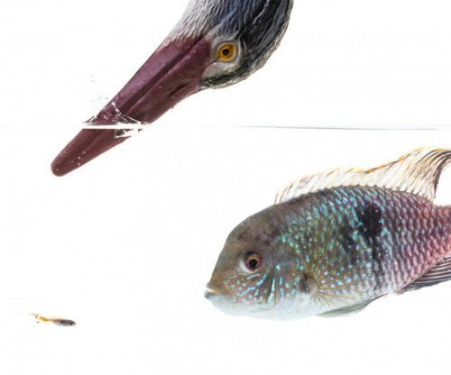 Fish have unique, complex personalities